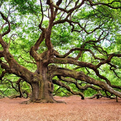 Grote-groene-boom