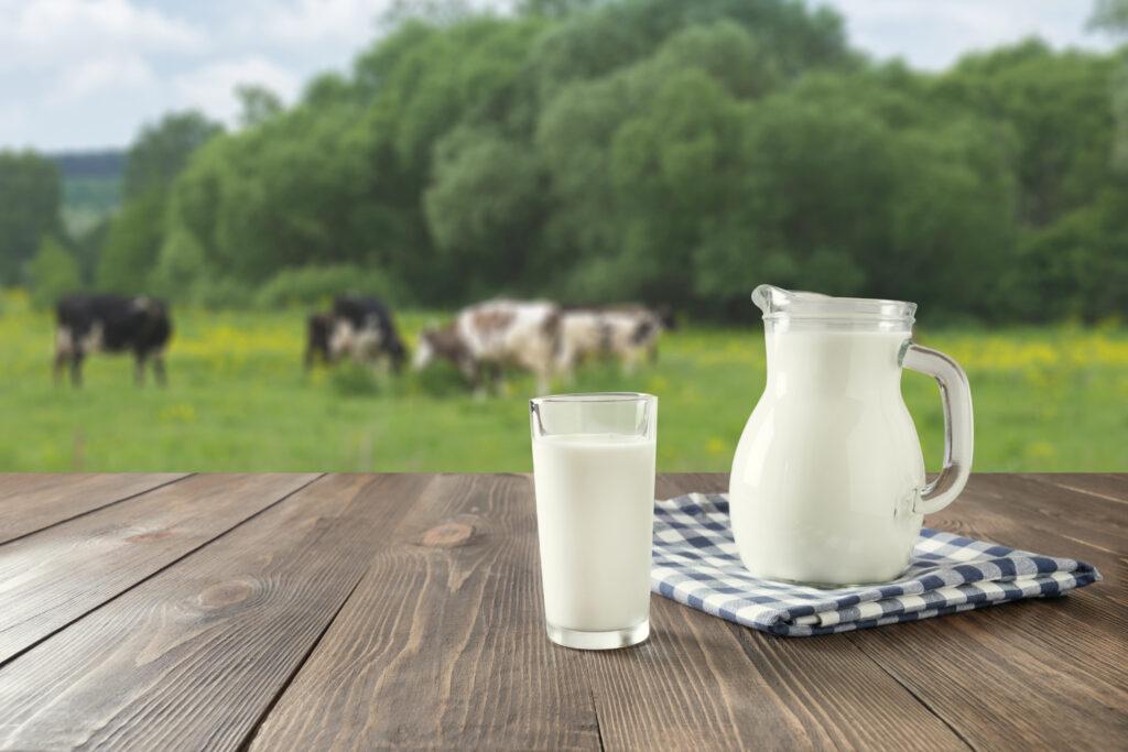 Melk-met-koeien-grasveld