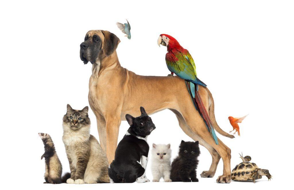 Een groep verschillende huisdieren, waaronder een kat, hond en vogels